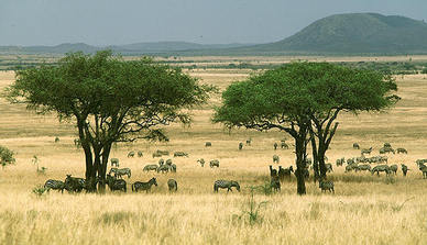 Precipitation temperature soil savanna the african savanna has a relatively moderate temperature with it not going over 86 f and not going under 68 f during the winter which can pretty much sciox Choice Image
